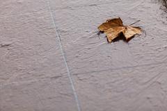 Stock Photo of Fall. Single autumn maple leaf on ground