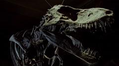 Dinosaur fossil,Tyrannosaurus Stock Footage