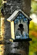 Cute Birdhouse on a Birch Tree - stock photo