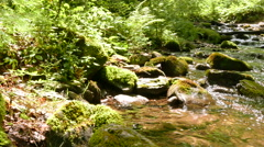 Stream  in mountain wood, sunny day shot.   4K 3840x2160. Panorama Stock Footage