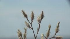 Dry Leaf in forest, garden, field, meadow, 4k Stock Footage