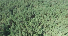 Flying above the green coniferous forest Stock Footage