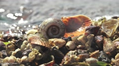 Wet colored seashells on the beach, river, ocean, 4k Stock Footage