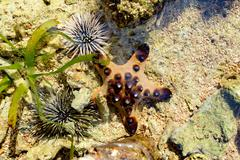 Sea Urchin and Starfish on the sea bed - stock photo