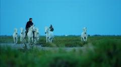 France Camargue animal horses wildlife Stallion Gelding travel - stock footage