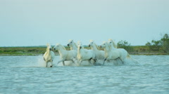 France, Camargue coastline horse water running travel - stock footage