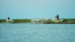 France, Camargue coastline horses water running travel Stock Footage