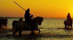 Camargue animal horses France sunset wildlife water - stock footage