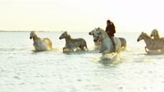 Animal horse white livestock female rider cowboy sea - stock footage