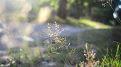 Summer dry blade of grass beside the road in the woods Stock Footage
