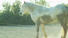 Horse France Camargue animal wild Stallion Gelding freedom - stock footage