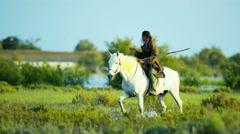 Camargue bull France cowboy animal horse vegetation water Stock Footage