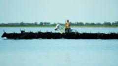 Camargue bull animal wildlife black livestock horse water Stock Footage