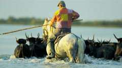 Cowboy Camargue bull animal wild horse rider sea France Stock Footage