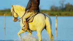Cowboy female Camargue bull animal wild horse rider water Stock Footage