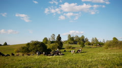 Herd of farm domestic animals grazing on green field - stock footage