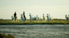 Stock Video Footage of France Camargue animal horses environment running rider cowboy