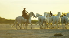 France Camargue animal horses cowboy wetland freedom - stock footage