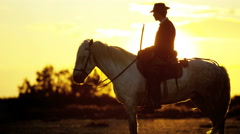 Cowboy France sunset Camargue animal horse wild livestock - stock footage
