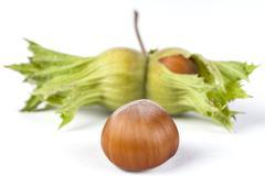 Hazelnut with Green - stock photo
