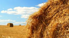 Sheaves of hay in the rural field - stock photo