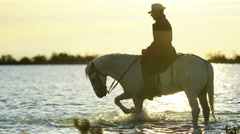 Cowboy Camargue rider animal horse sunset grey livestock - stock footage