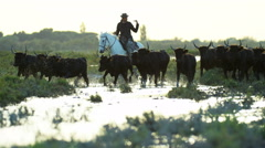 Bull black running water Camargue animal freedom cowboy Stock Footage
