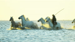 France Camargue horses running rider cowboy water - stock footage