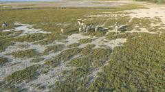 Aerial Camargue France animal horses cowboy people coastline Stock Footage