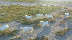 Aerial Drone animal horse cowboy power tourist Stock Footage