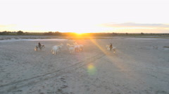 Aerial Camargue France animal horses cowboy people free Stock Footage