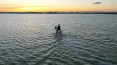 Stock Video Footage of Aerial cowboy sunset Camargue horse marshland livestock water