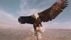 Slow motion bald eagle catching lure in the desert 100 fps - stock footage