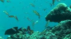 Scuba Diving at Blue Corner on the Island of Palau Stock Footage