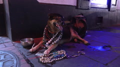 Party dog on Bourbon Street in downtown New Orleans Stock Footage