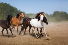 Herd of running horses - stock photo
