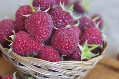 Natural raspberry Stock Photos