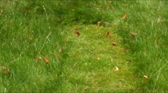 Swath - a row of grass as it looking after mown Stock Footage