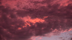 4K Flying Bats Pink Storm Clouds Halloween Eve Stock Footage