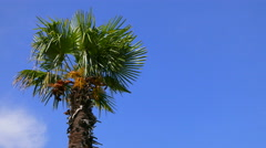Palm tree against the bright blue sky. Stock Footage