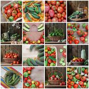 Collage from still lifes with cucumbers and tomatoes. - stock photo