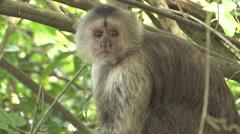 Monkey in the Rainforest of Venezuala Stock Footage