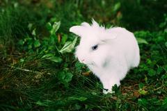White Funny Bunny Rabbit On Green Grass - stock photo