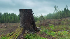 Single tree stub, timber felling, dark storm clouds, fog, time-lapse Stock Footage