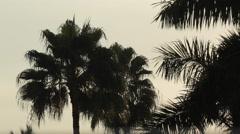 Palm Trees, Nuevo Vallarta, Nayarit, Puerto Vallarta, Mexico, North America Stock Footage