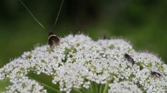 Insects on a flower Stock Footage