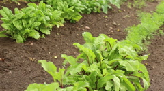 Vegetable organic garden in spring video footage Stock Footage