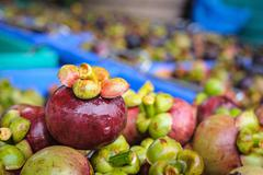Fresh mangosteen fruit after harvest waiting to be sold. - stock photo