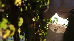 Wine Making. Stock Footage