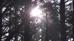Forest Sun Flare: Foilage Stock Footage